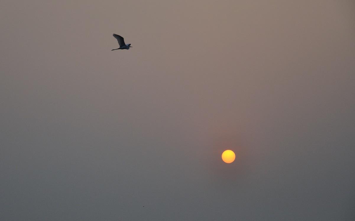 Bird with Sun
